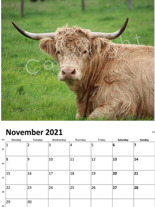 Highland Cow Calendar 2021