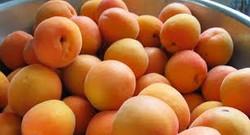 selecting fruit