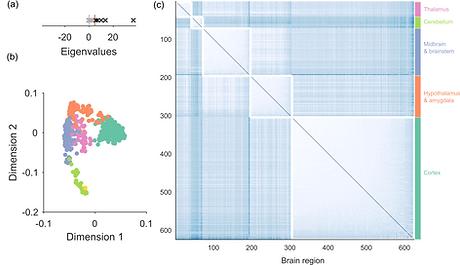 Example of applying spectral estimation of the Allen Mouse Brain gene atlas
