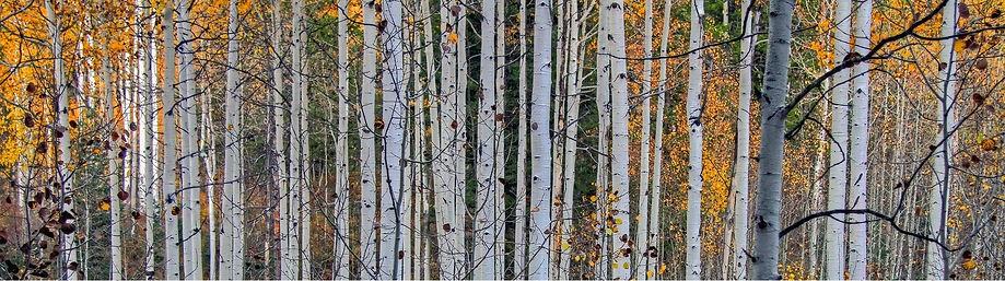 Colour Branches (414644).jpg