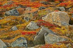 Fall Tundra, Arctic Circle