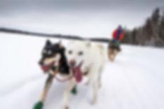 Dogsledding La Ronge Paws And Paddles Wi