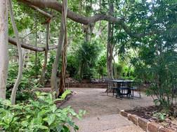 Seating under Banyan Fig Trees.jpeg