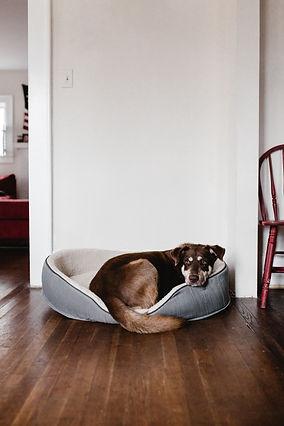 dog-on-pet-bed-2248516.jpg