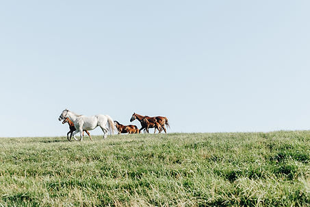 Kentucky Travel Photography