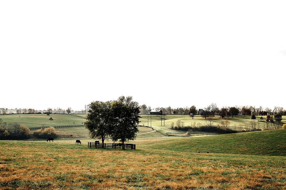 Horse-Farm-3.jpg