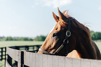 Kentucky Horse Farm Photographer