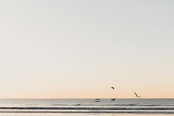 Carolina Sunrise.jpg