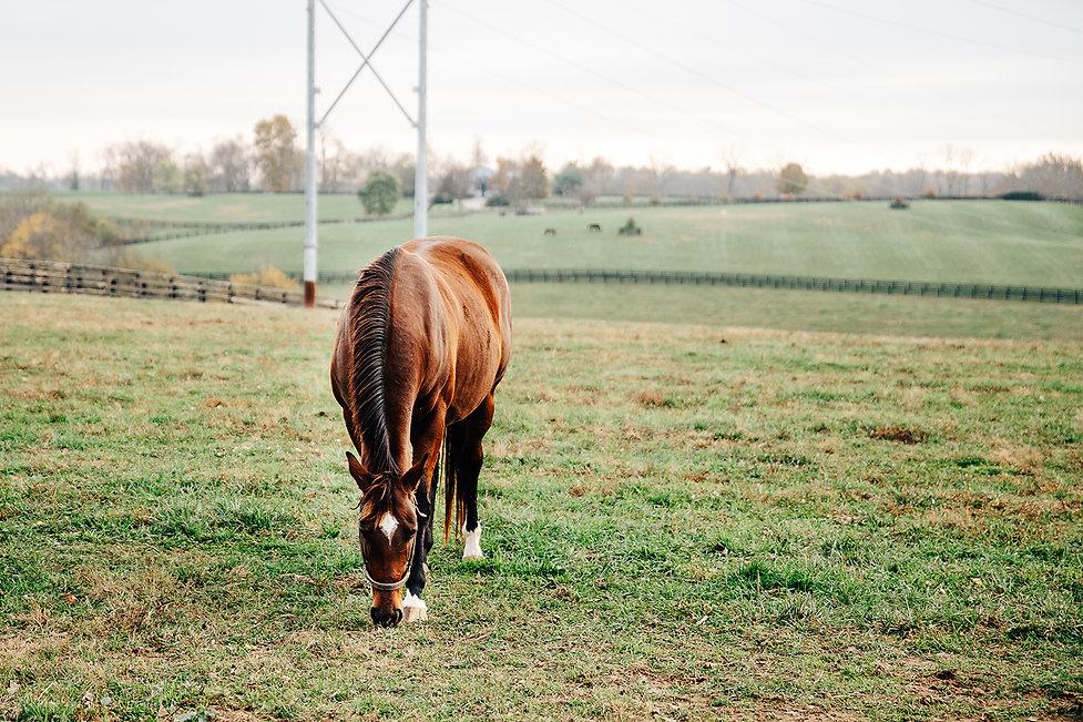 Horse-Farm-10.jpg