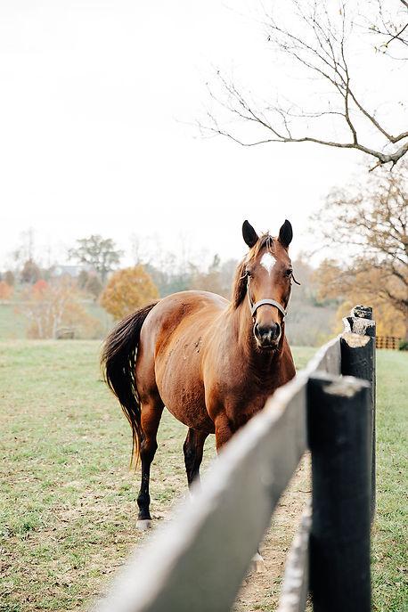 Horse-Farm-5.jpg