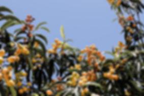 Plants-24.jpg