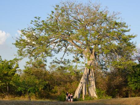 Costa Rica Family Vacation in Hacienda Pinilla