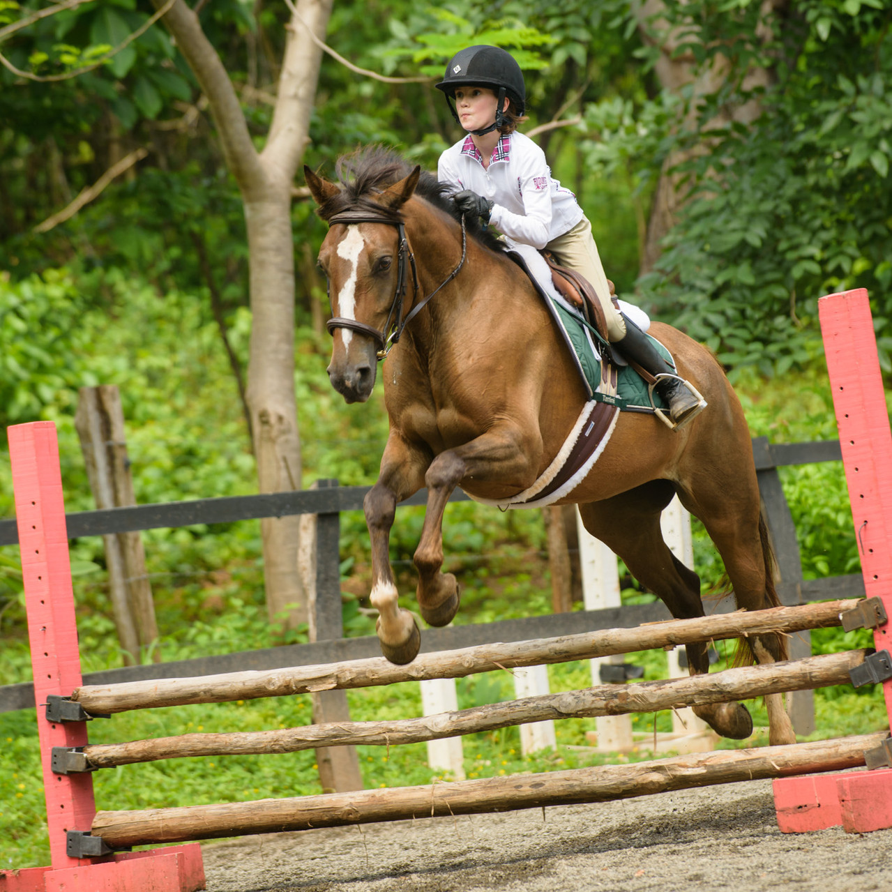 Costa Rica horse show photography