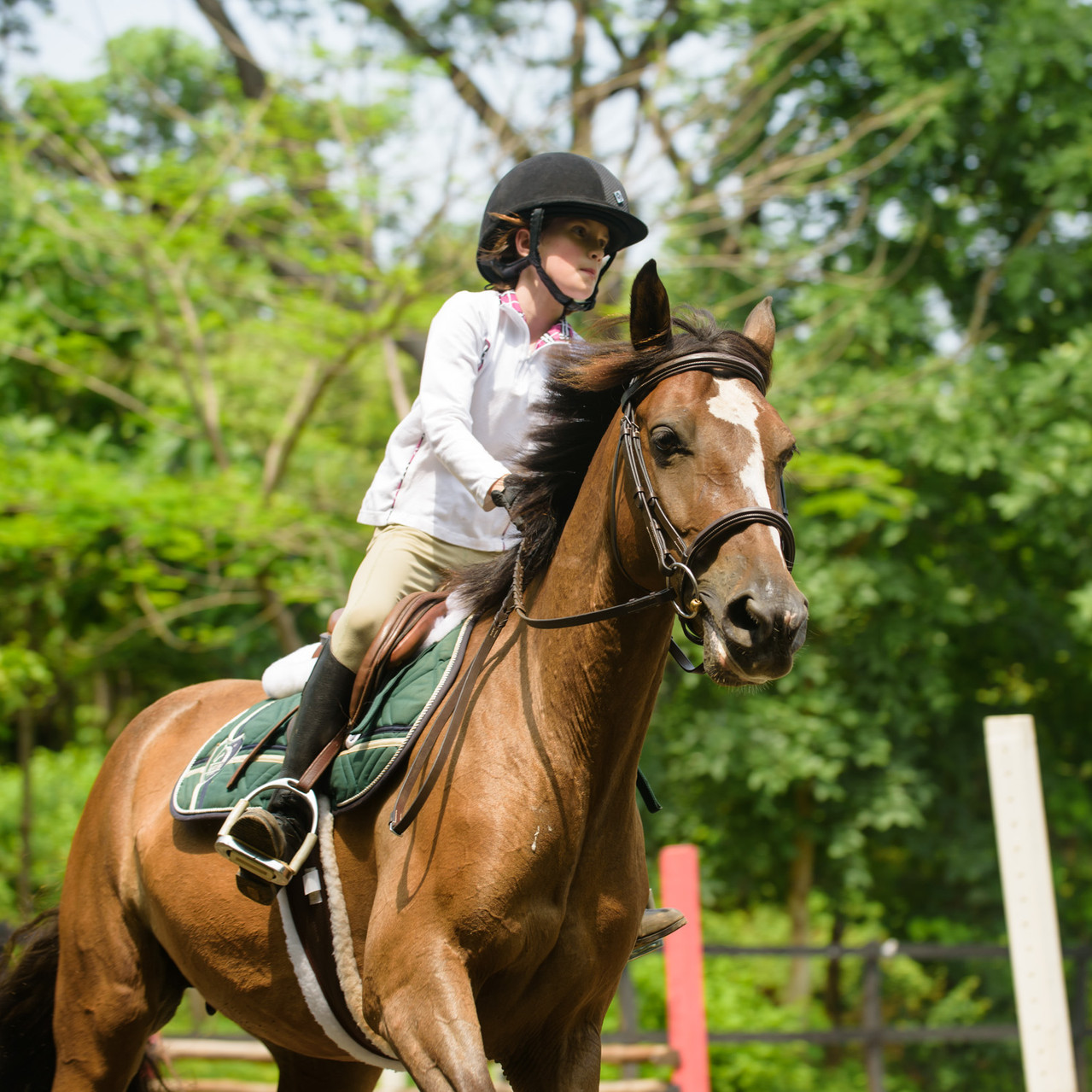 Around the track at Costa Rica Equestrian Vacations