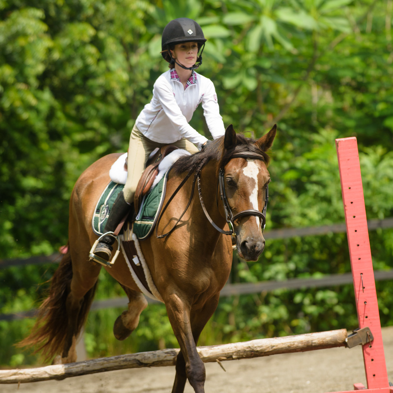 How to find horseback riding in Costa Rica