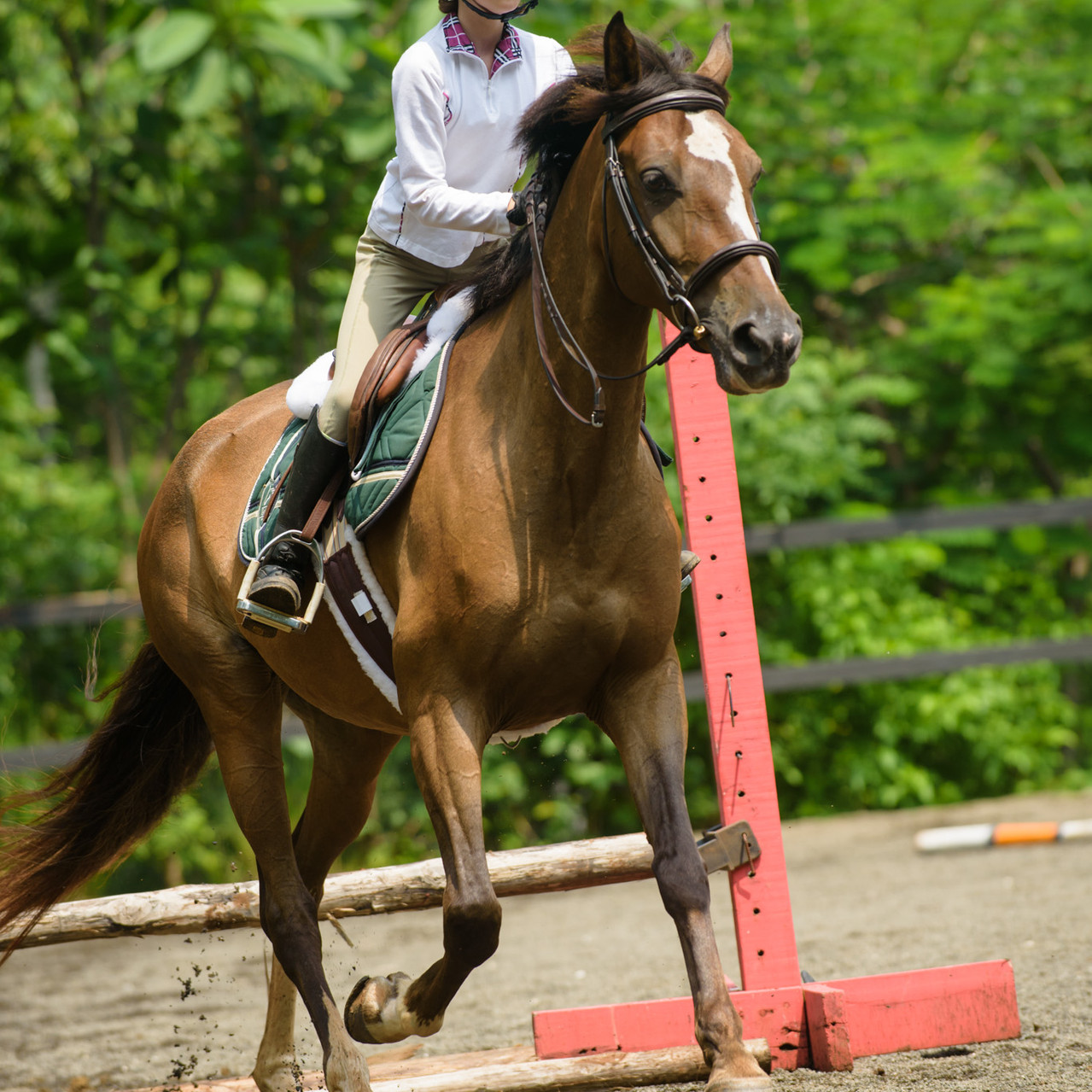 Professional equestrian photography in Costa Rica