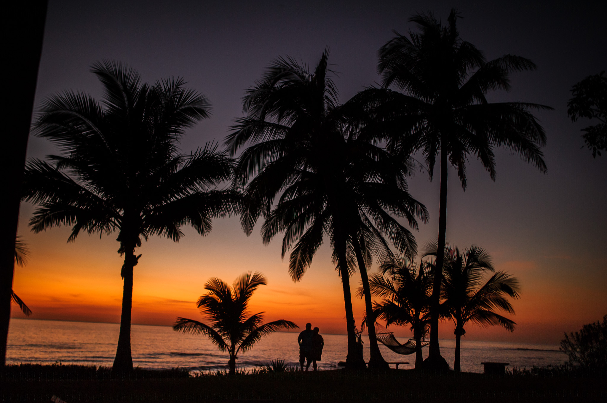 Palms trees at dusk on Junquillal Beach