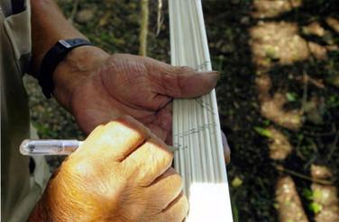ramos-6-large.jpg