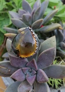 Moss amber ring $1,200 pesos plus shipping (mas envio)