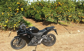 2013 Honda CBR250R motorcycle in an Israeli orange grove