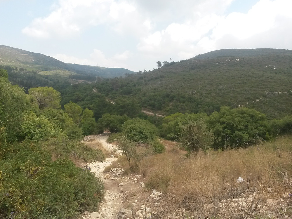 Hiking in the Carmel forest, off of route 721, Israel.