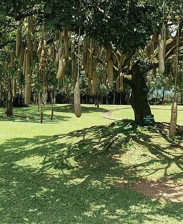 arbre a saucisse.jpg