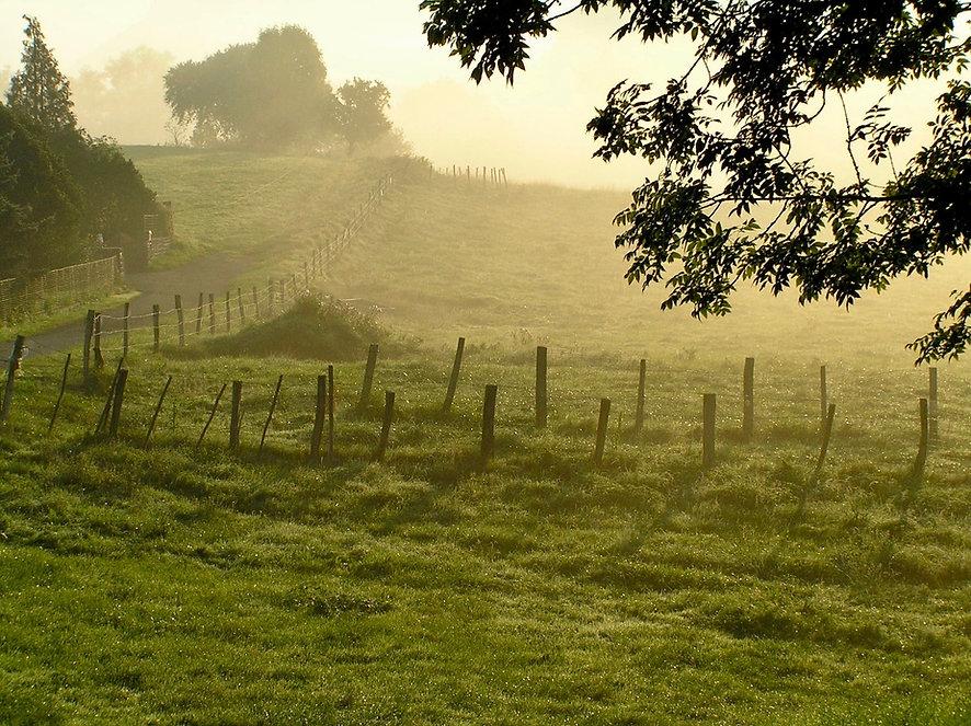 landscape-tree-nature-forest-grass-mist-