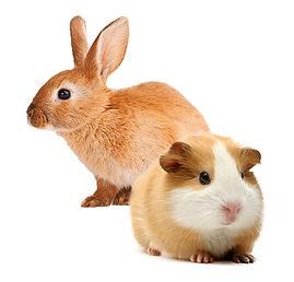 small-animals.jpg