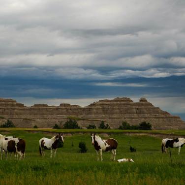 Views from the road South Dakota June 2018