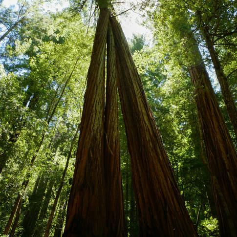 Big Basin Redwoods State Park California July 2018
