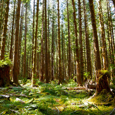 The Black Forest Washington September 2018