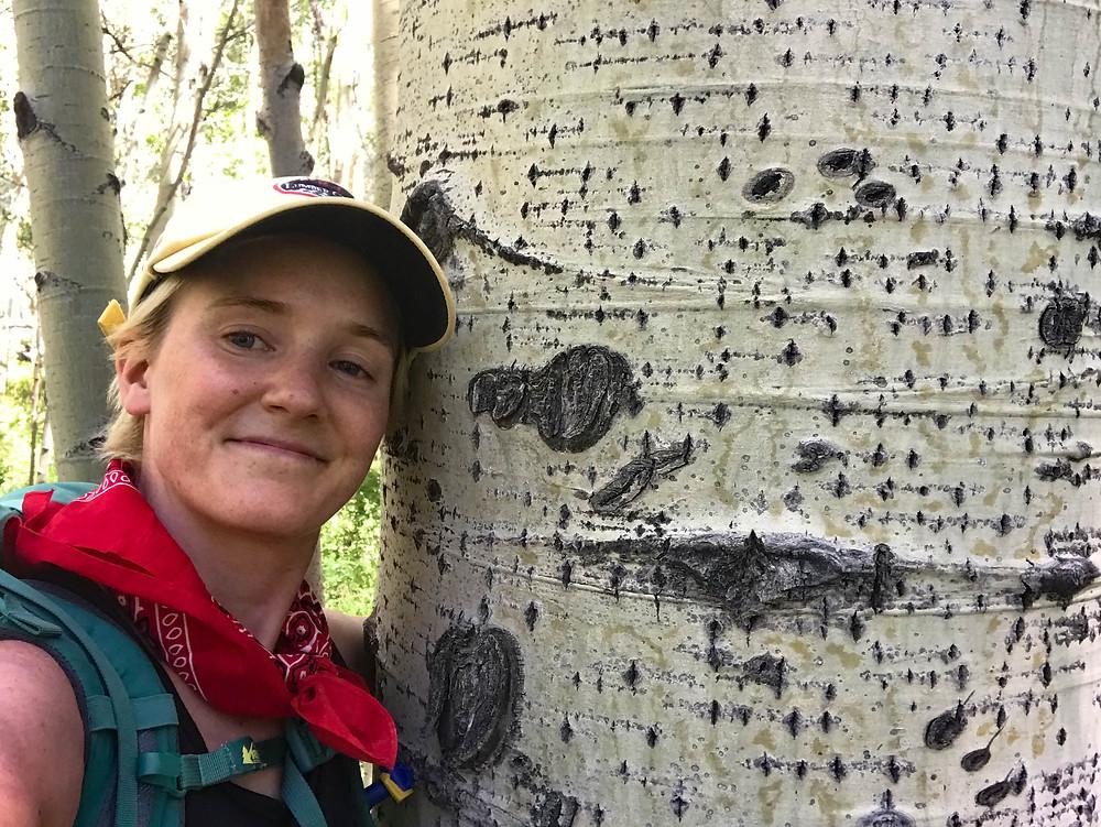 Trees Manti-La Sal National Forest
