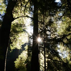 Olympic National Forest Washington September 2018