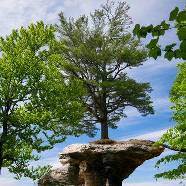 Chapel Tree Pictured Rocks National Park Michigan June 2018