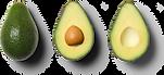 Avocado-Empty.png