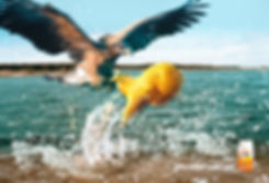 Creat print ad of hawk trying to catch a Goldfish cracker jumping out of the water.