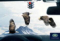 Eagles-Crossing-Land-Rover-Print-Campaig