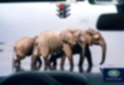 Elephants-Crossing-Land-Rover-Print-Camp