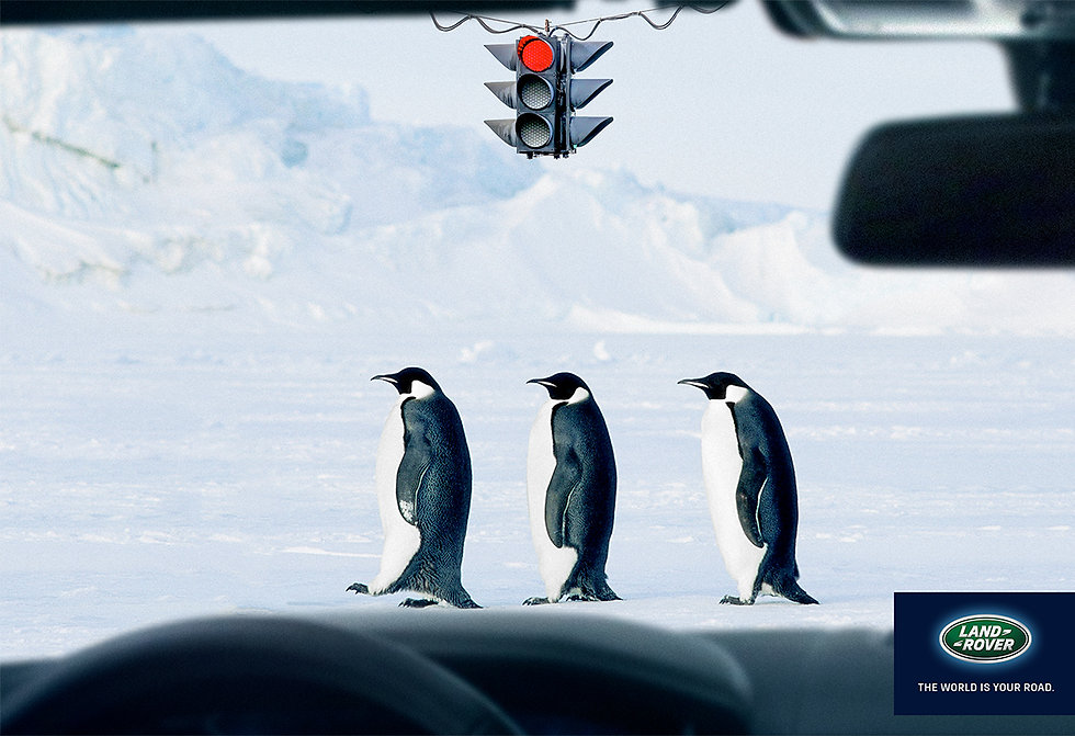 Penguins-Land-Rover-Crossing-Print-Campa