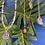 Thumbnail: Beere / Berry. Brasilianischer Amethyst