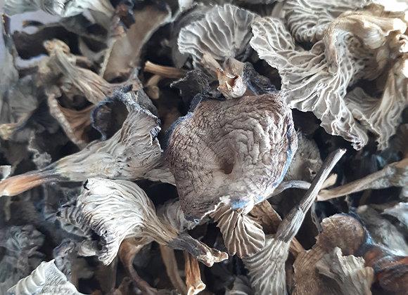 Champignons séchée : Chanterelle en tube