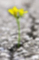 flower in concrete.png
