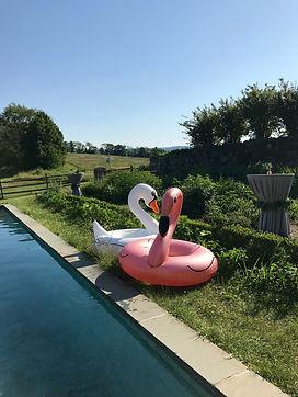 A&E Swans pioneer farm.jpg