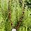 Thumbnail: Collier pierres fines, cristal et bois avecpendentif fleur nacre.