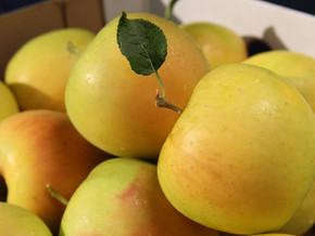 What's the Buzz with Opal Apples?