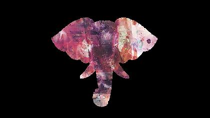 homepage elefant.png