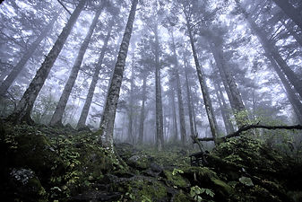 Interconnected-Forest.jpg