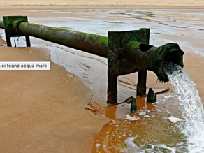 mediterraneo invaso dai rifiuti organici