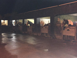 mounted police3