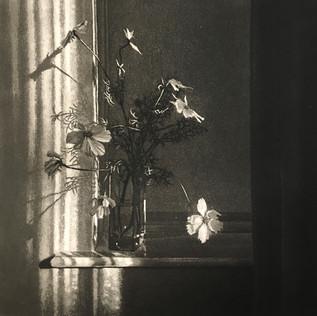Window Light XXIII